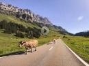 3 Tage, 9 Alpenpässe, 1.600km - Motorrad Alpentour 2020