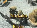 Nockalm 2005