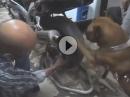 Abgefahren: Kettenöler Antrieb - Braver Hund und sehr coole Erziehung