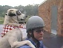 Braver Hund ... der ideale Begleiter für Herrchen und Harley
