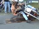 Burnout Crash: Den Affen gemacht und sich redlich blamiert - Burnout Depp