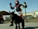 Moto-X-Esel - Donkey's Gear
