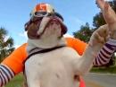 Wie geil: Motorrad Hund: Beherrscht den Motorradfahrergruß