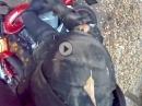 Crash: Auto rechts abgebogen, Biker abgeflogen - Wer hat schuld?