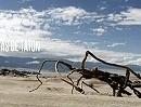 Dakar 2012 Impressionen 5. Etappe Argentinien Chile Peru
