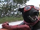 Der Hund Bobaji muss mit - Basta, und wenn es quer durch die USA ist ;-)