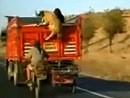 Mega dreist: Motorrad Diebe klauen Schafe während der Fahrt!