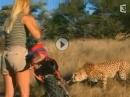 Enduro-Fahrerin vs. Geparden: Das Mädel hat Eier und zwar ganz Dicke!