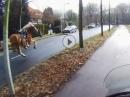 """""""Fang den Gaul"""" Durchgegangenes Pferd mit Bike verfolgt um es einzufangen"""