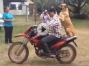 Gassi gehen war gestern, Gassi fahren mit dem Hundi ist angesagt ...