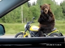 Grizzly auf Ducati Scrambler - Fake?