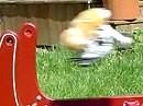 Hamster Sprung - Pastrana ist ne Nulpe dagegen - Hammy the Hamster setzt Maßstäbe