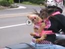 """Hundetransport: Könnte er reden würde er sagen: """"Du hast den A***** offen"""""""