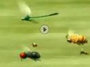 Insektenracing - genial gemacht - Mega!