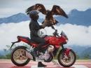 Moto Guzzi V100 Mandello - Vorschau Mj.: 2022