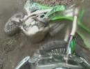 Motocross Abflug: Wasserloch, zu schnell, am Baum geankert