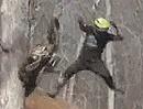 Motocross Sprung: Ich kann den Baum hochspringen - wetten?