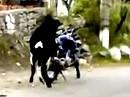 Motorrad Begattung - SO werden KEINE Motorräder gemacht!