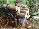Motorrad Holztransport Schinderei - Ein klein bisschen überladen