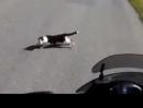 Motorrad vs Katze will sich vor meine Kawasaki 1400 GTR schmeissen