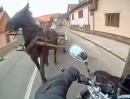 """Motorrad vs. Pferd - """"Ich glaub mich trifft ein Pferd"""""""