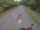 Motorrad Wildunfall: Reh gesehen, Schreckbremsung, Abflug