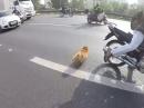 Motorradfahrer sind Tierfreunde! Hund auf Autobahn 'gerettet' Coole Aktion
