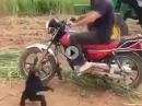 Motorradgeil: Der Affe steht auf Moppets