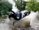 Ouad / ATV Abflug vom Feinsten: Punktlandung, Treffer, versenkt. Besser geht nicht!