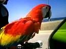 Papagei on Bike - Wer hat hier den Vogel? Brüller der Woche