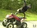Quad ATV Stuntriding mit beinamputiertem Fahrer - Hut ab!