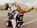 Quad ATV Stuntriding mit Big Kazan - Sehr geil gemacht!