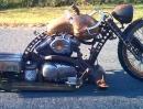 Redneck Limo Rat Bike Motorradumbau von After Hours Bikes