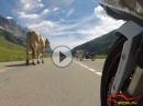 Ride your love: Schweizer Alpen, Schwarzwald, Dolomiten - Top!!!