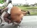 Tiertransport - unglaublich ;-)