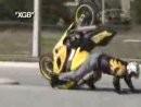 Motorrad Crash Comilation: Touchdown mehr oder weniger lustig