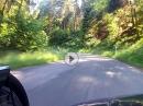 Wald-Fahrt mit Gespann - Neckarhausen - Haag, Odenwald