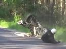 Wheelie Crash: Ist das Wheelie überzogen, kommt schnell Plastik angeflogen