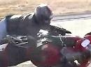 Wheelie Crash mit Flurschaden - außer Spesen nichts gewesen