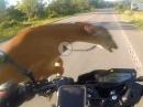 """Wildunfall Crash: Wenn Dir das """"Rehlein"""" ins Gesicht springt - Fahrer und Reh ok"""